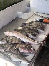 Diamond Shoals Restaurant, Fresh Catch at Diamond Shoals Restaurant and Seafood Market
